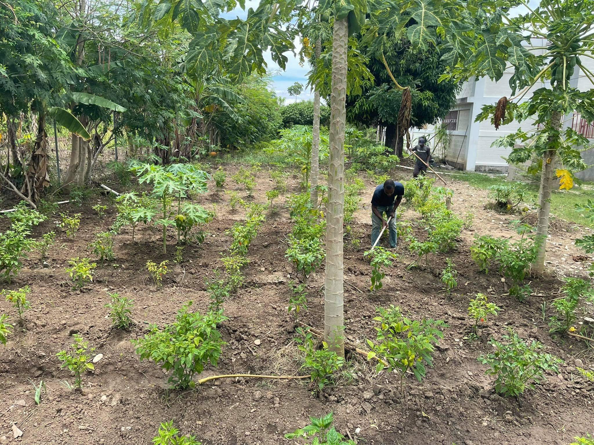 operation outpour, haitian agriculture, haitian missions