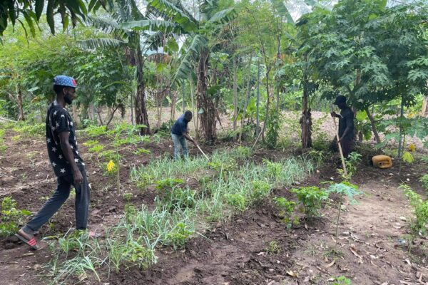 agriculture program, operation outpour, agriculture support in haiti